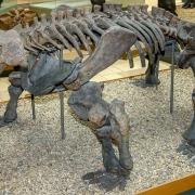 Urtümlicher Saurier Bradysaurus baini Seeley, ca. 252 Mio. Jahre, Südafrika