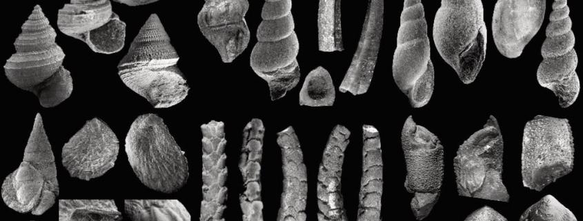 Fossilien aus dem fränkischen Amaltheenton