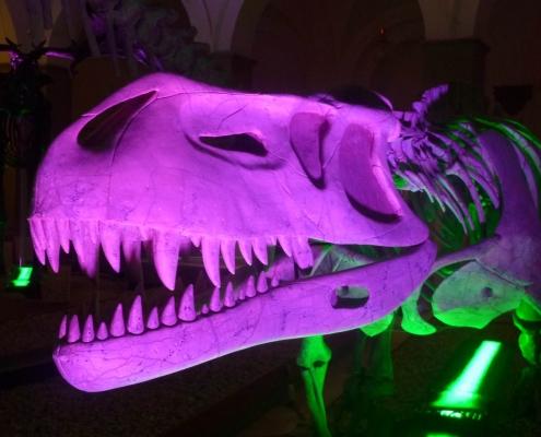 Farbig illuminierter Prestosuchus auf der Langen Nacht der Museen