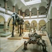 Blick in den Lichthof des Paläontologischen Museums