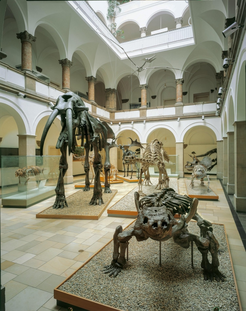 Paläontologie Museum München