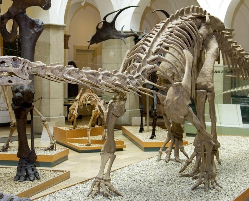 Dinosaurier Plateosaurus engelhardti Meyer, ca. 205 Mio. Jahre, Franken