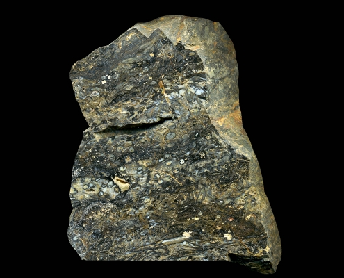 Fossil des Monats April 2020: Gesteinsblock Rhynie Chert