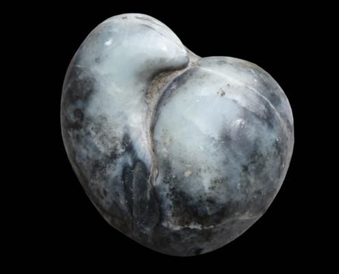 Fossil des Monats Juni 2020: Stringocephalus