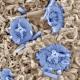 Fossil des Monats September 2020: Kalkflagellat