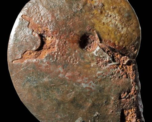 Fossil des Monats Februar 2021: Oxycerites